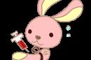 ウサギ採血