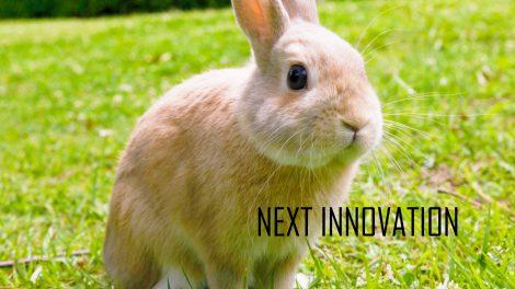 next innovation rabbit