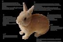 ウサギの特徴