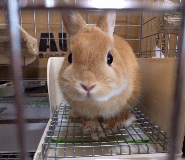 トイレinウサギ