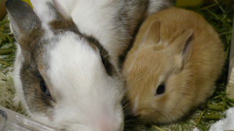 母ウサギ子ウサギ