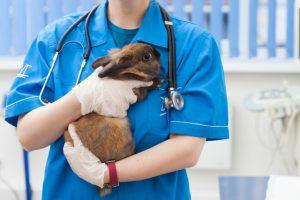 獣医師とうさぎ